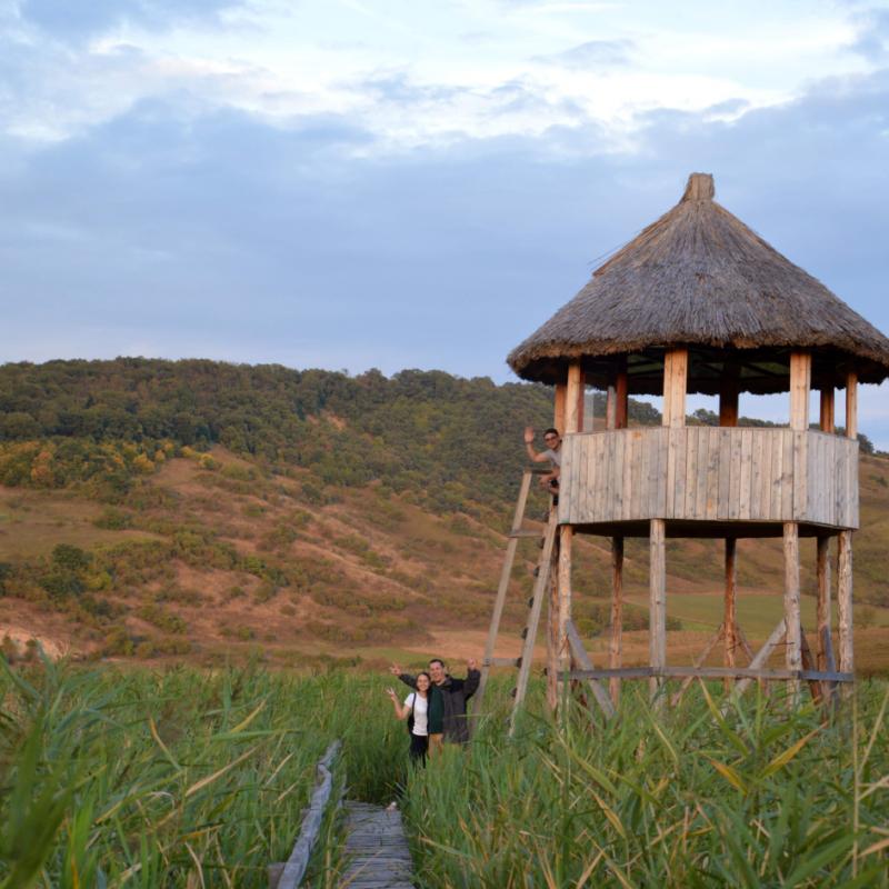 Reeds near Cluj-Napoca